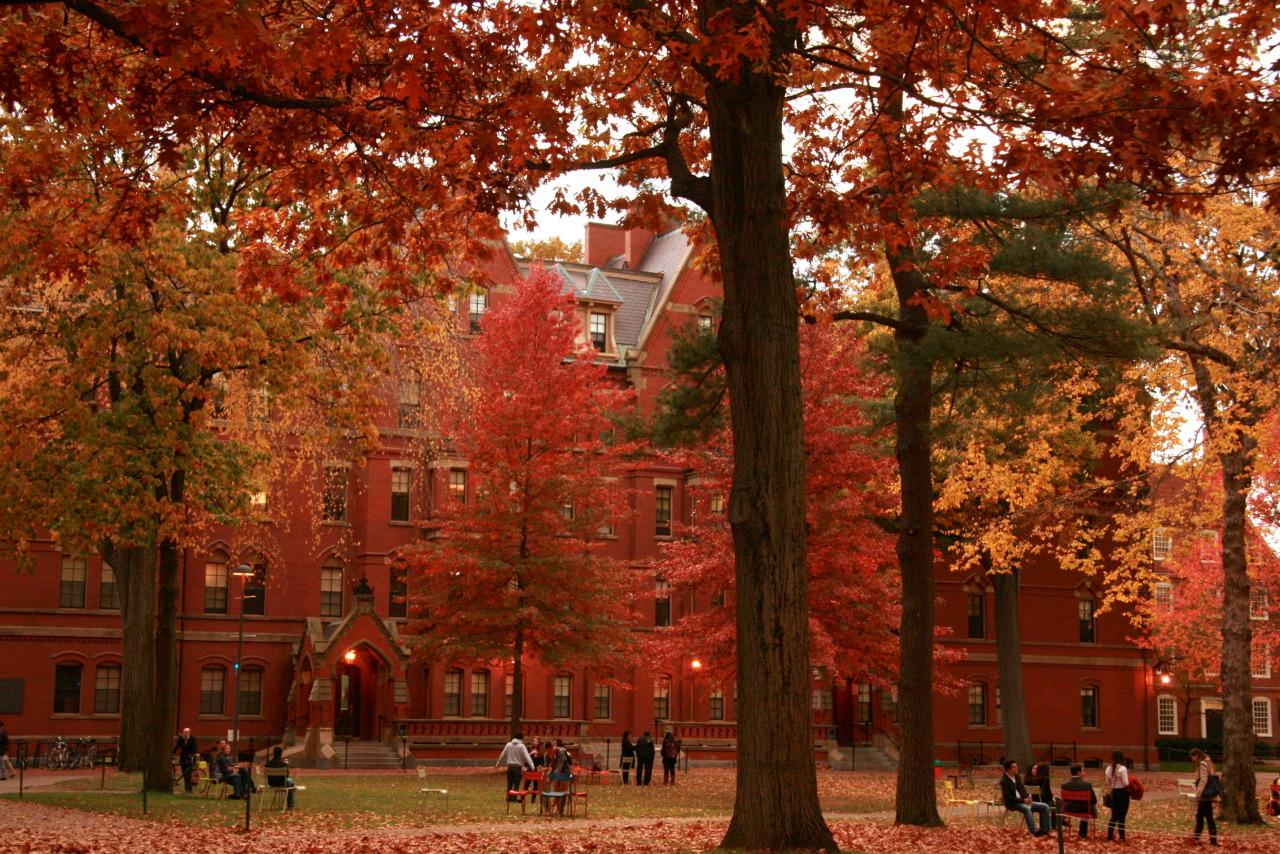 2021 წლის TOP 5  საუკეთესო უნივერსიტეტი (Global Universities)